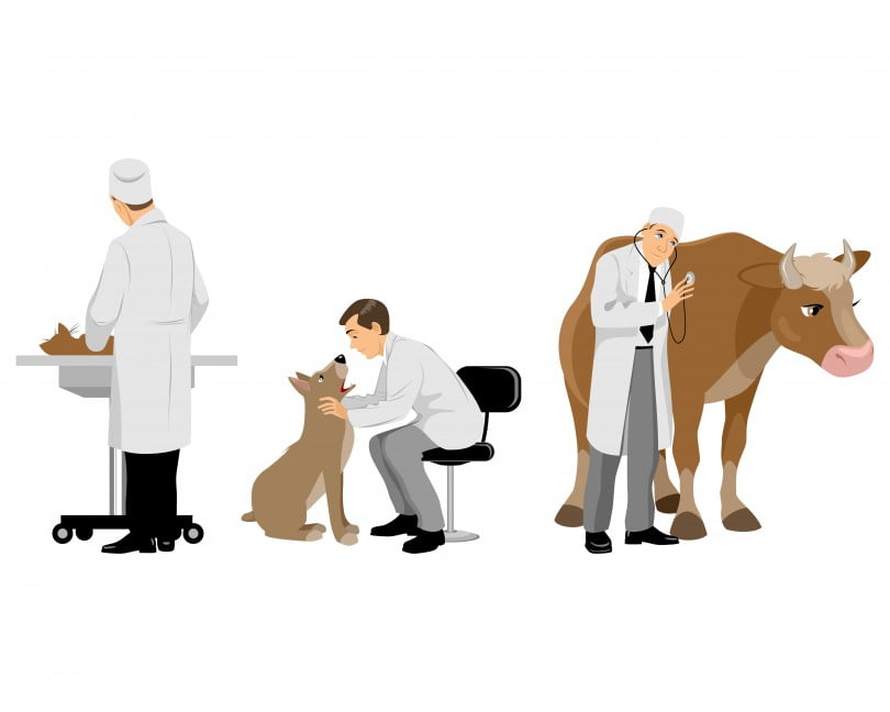 Vector illustration of a veterinarians with pets set