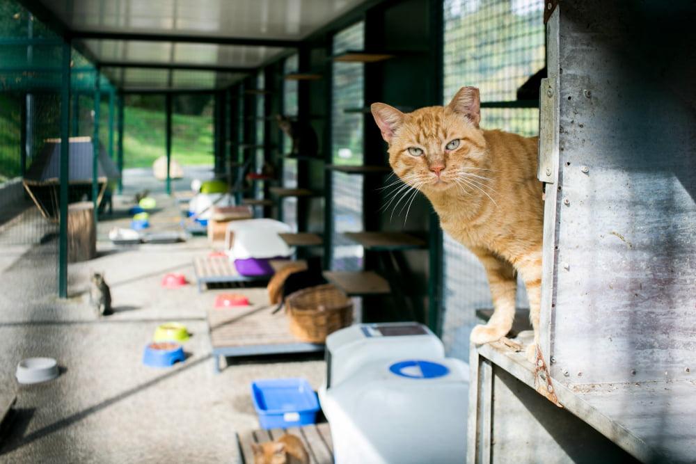 casa_animais_lisboa_veterinaria_atual_14
