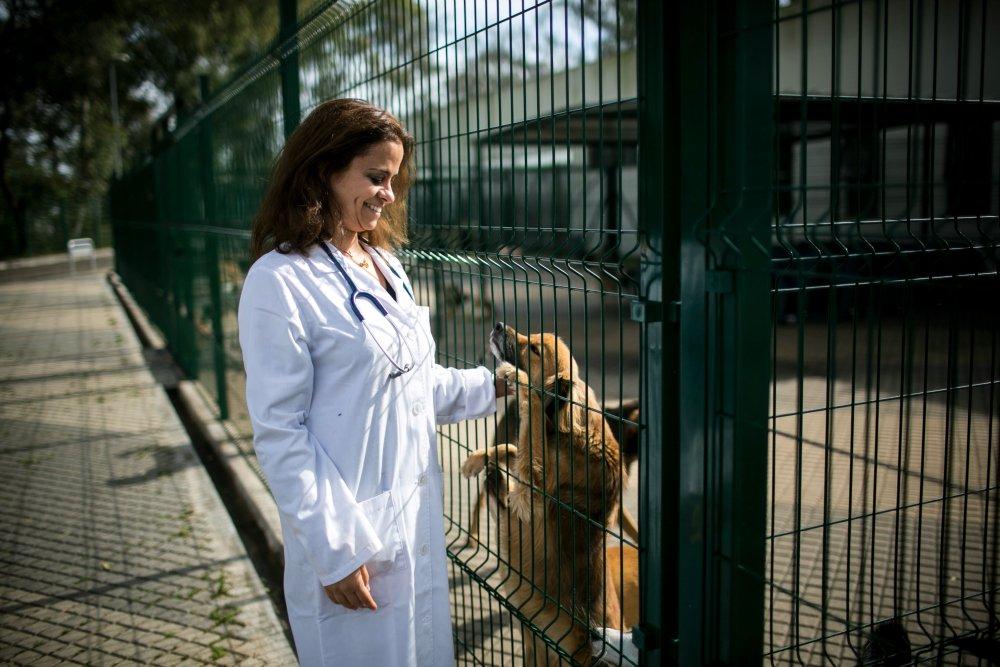 casa_animais_lisboa_veterinaria_atual_15