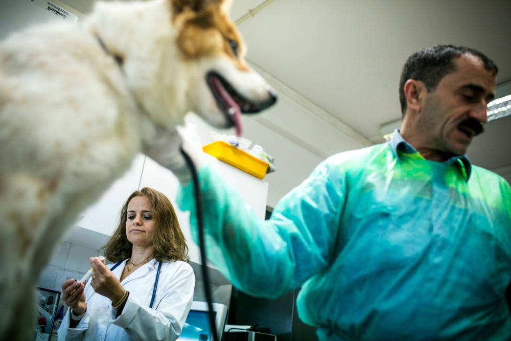 casa_animais_lisboa_veterinaria_atual_8