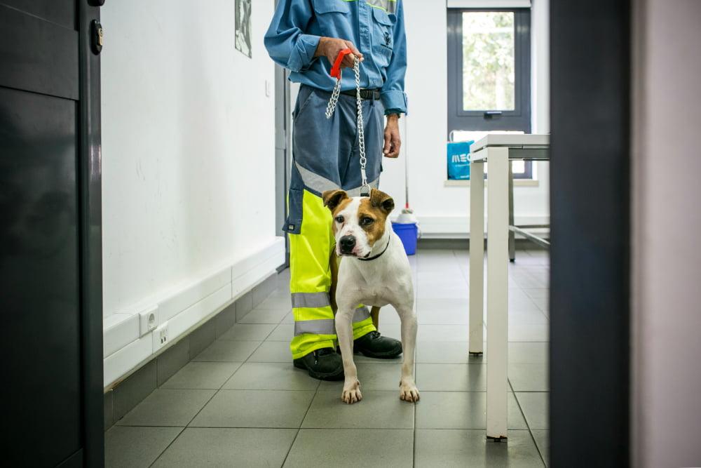 casa_animais_lisboa_veterinaria_atual_9