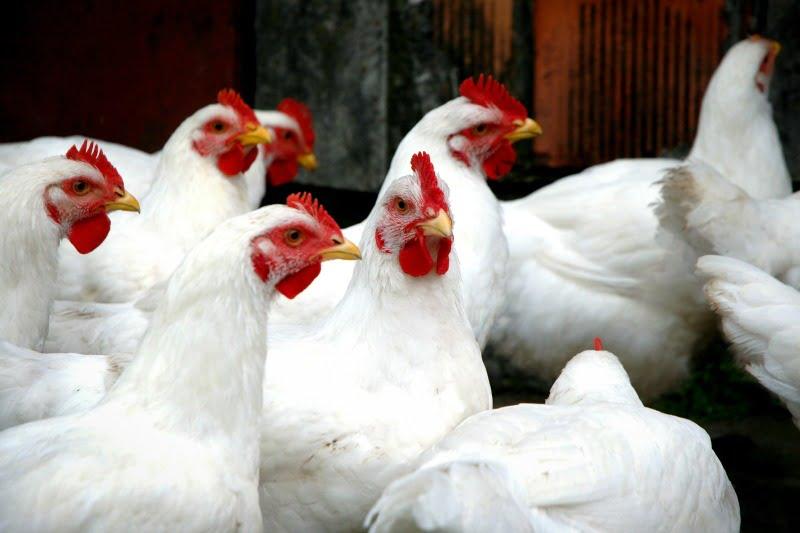 Produtores pecuários das zonas afetadas pelos incêndios isentos de pagar registo animal