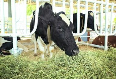 Doença das vacas loucas detetada em Espanha
