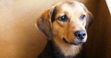 OMV apela à adesão dos municípios ao cheque veterinário