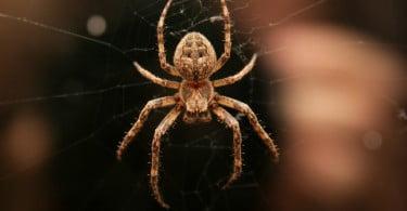 seda de aranha