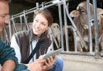 Governo cria bolsa de inspetores veterinários