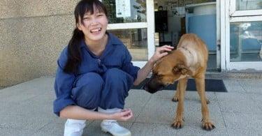 veterinária de Taiwan com cão - Veterinária Atual