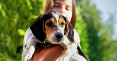 cão e criança Veterinária Atual