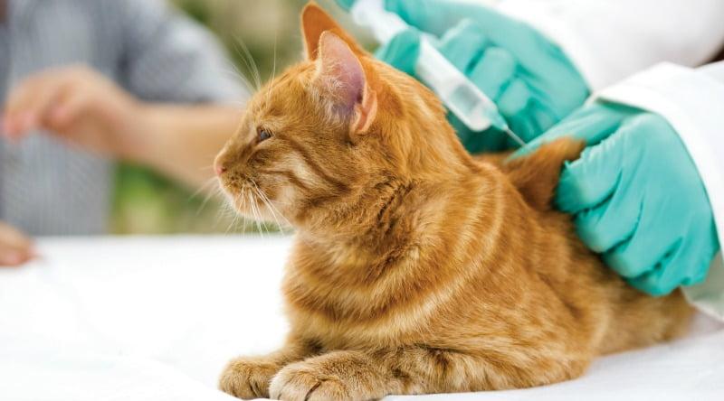 OMV alerta para casos de falsos veterinários