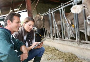 utilização de antibióticos na produção animal