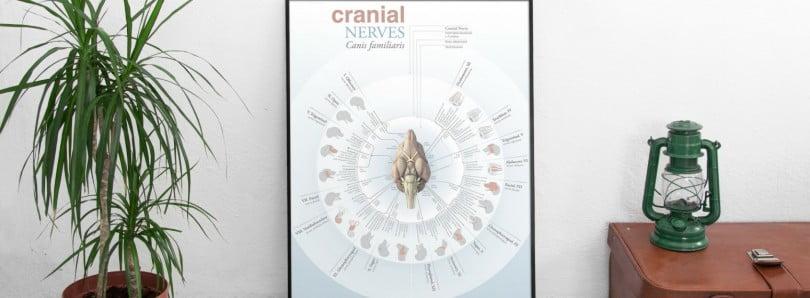 poster nervos cranianos Diogo Guerra Veterinária Atual