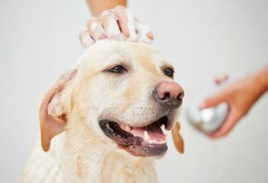Higiene pode ser uma forma eficaz de tratar MRSA e MRSP