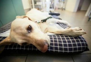 Italiana ganha direito a ficar de baixa para cuidar de cão doente