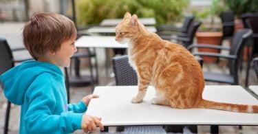criança a brincar com gato
