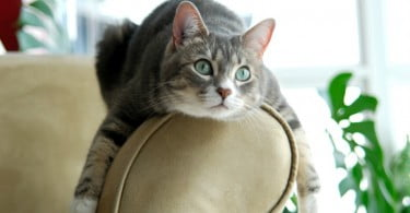 gato no sofá - Veterinária Atual