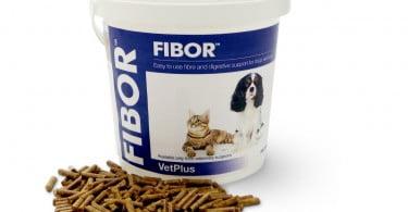 Fibor_veterinarua_atual