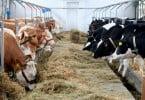 UE e Argentina fecham acordo para o bem-estar animal