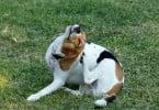 Como lidar com um cão com alergias