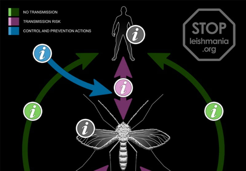 Leishmaniose - site prevenção e controlo