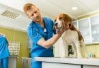 cão examinado por veterinário  - Veterinária Atual