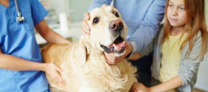 cão no veterinário - Veterinária Atual