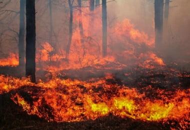 incêndio florestal - Veterinária Atual