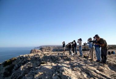 Festival de Observação de Aves & Atividades de Natureza já tem data