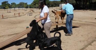 Olhão já tem um parque canino