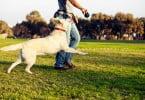 Lisboa vai ter 20 novos parques caninos