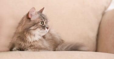 Como determinar origem de problemas comportamentais em animais