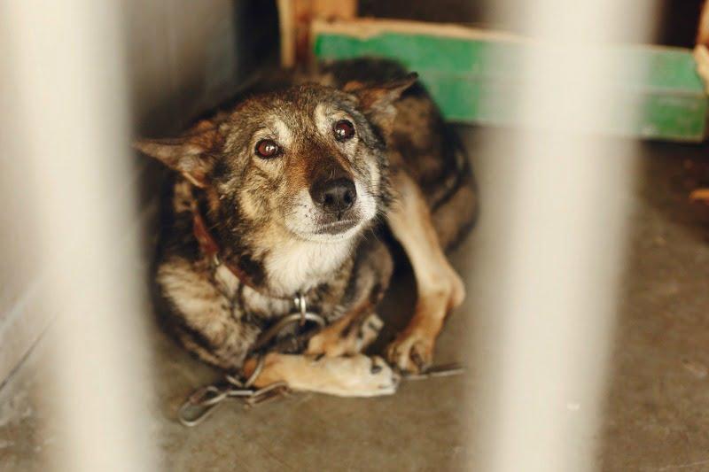 Cabify quer promover adoção de animais abandonados
