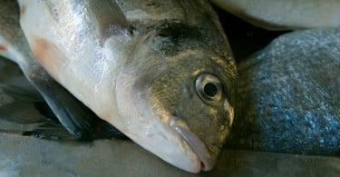 Aquacultores defendem: é preciso enquadrar projeto que define Ato Médico-Veterinário
