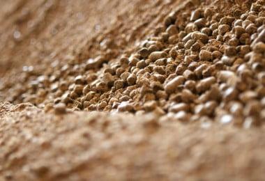 Resíduos de glifosato em rações não representam risco para a saúde animal