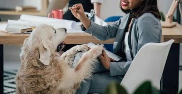 E se o seu melhor amigo de quatro patas dividisse o escritório consigo?