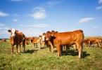 APIFVET marca presença em debate sobre produção animal sustentável