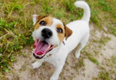 SEPNA vai inspecionar plataformas de venda de animais