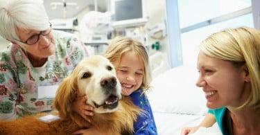 Hospital permite que crianças internadas recebam visitas de cães