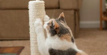 Remoção de garras em felinos: sim ou não?