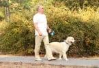 Poderão os cães substituir os personal trainers? Um novo estudo diz que sim