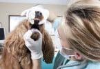 É oficial: ato médico veterinário avança