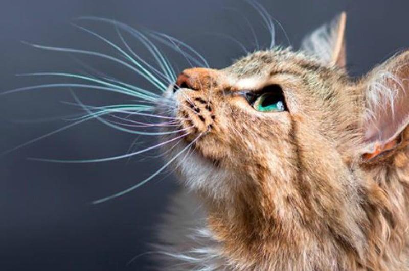 A curiosidade salvou o gato: Royal Canin quer promover visitas regulares ao veterinário