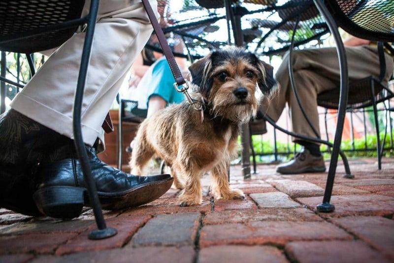 Associação que representa restauração diz que animais em restaurantes põem em causa a saúde pública