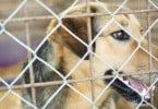 Campanha de apoio à esterilização de animais de companhia só atribuiu 8% das verbas disponíveis