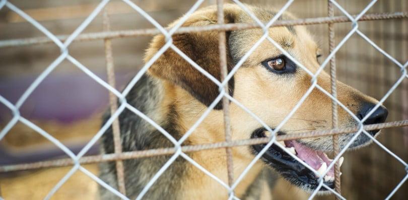CRO: há 500 mil euros de apoio à modernização para esterilização de animais