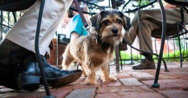 Estabelecimentos comerciais que permitam entrada de animais vão ter dístico