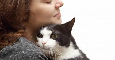 Gatos interagem mais com tutores após separação prolongada