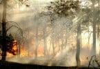 incêndios_veterinariaatual