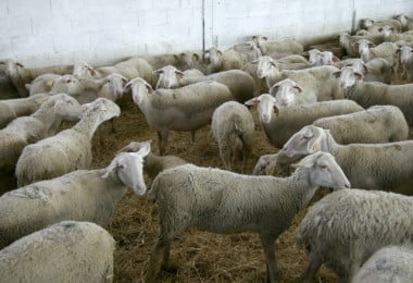 OMV e Governo preparam plano de apoio a animais em situação de catástrofe