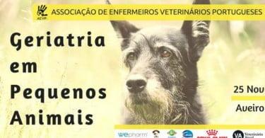 Sabe lidar com pacientes geriátricos? AEVP organiza curso de 'Geriatria em Pequenos Animais'