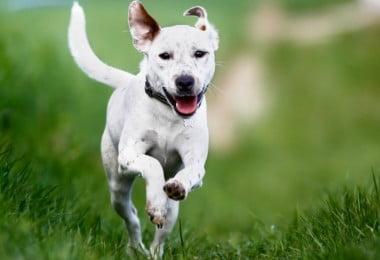 Causa da doença do disco intervertebral em cães identificada
